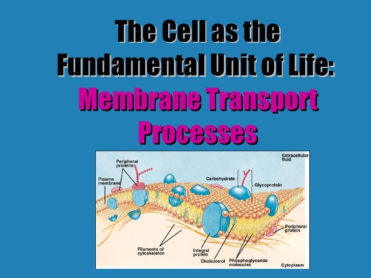 The Cell as the Fundamental Unit of Life:  Membrane Transport Processes
