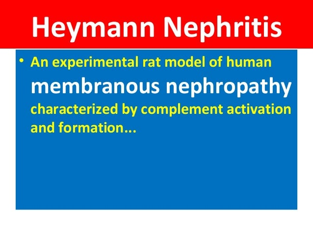 Heymann Nephritis • An experimental rat model of human membranous nephropathy characterized by complement activation and f...