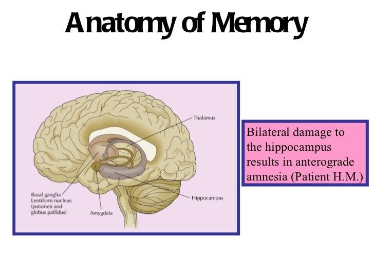Anatomy of memory