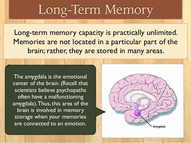 long term memory systems of the human brain How our brains make memories the brain's memory system works the work suggested that filing an old memory away for long-term storage after it had been.