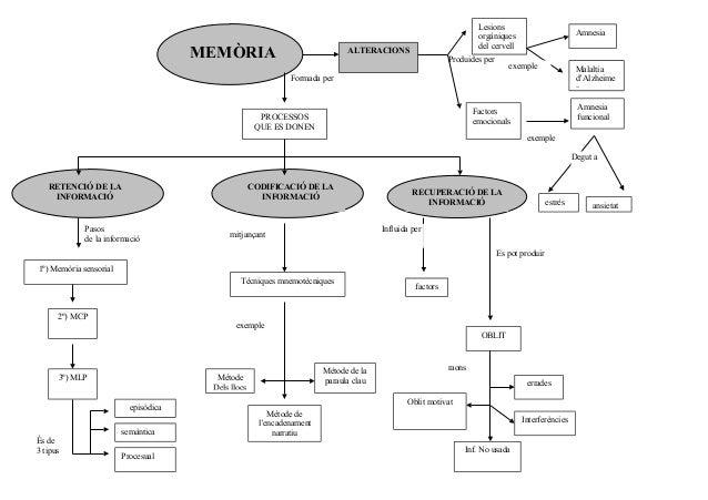 MEMÒRIA  Lesions orgàniques del cervell  ALTERACIONS  Produides per  Amnesia  exemple  Malaltia d'Alzheime r  Formada per ...