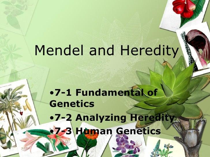 Mendel and Heredity <ul><li>7-1 Fundamental of Genetics </li></ul><ul><li>7-2 Analyzing Heredity </li></ul><ul><li>7-3 Hum...