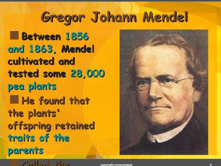 gregor mendel biography What are gregor mendel's three laws update cancel according to gregor mendel, what are the three laws of heredity what are mendel's law of genetics.