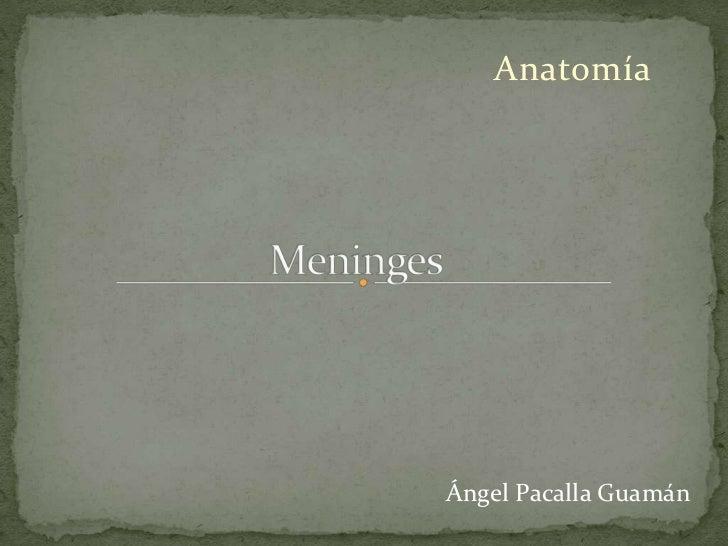 AnatomíaÁngel Pacalla Guamán