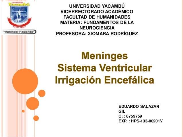 UNIVERSIDAD YACAMBÚ VICERRECTORADO ACADÉMICO FACULTAD DE HUMANIDADES MATERIA: FUNDAMENTOS DE LA NEUROCIENCIA PROFESORA: XI...