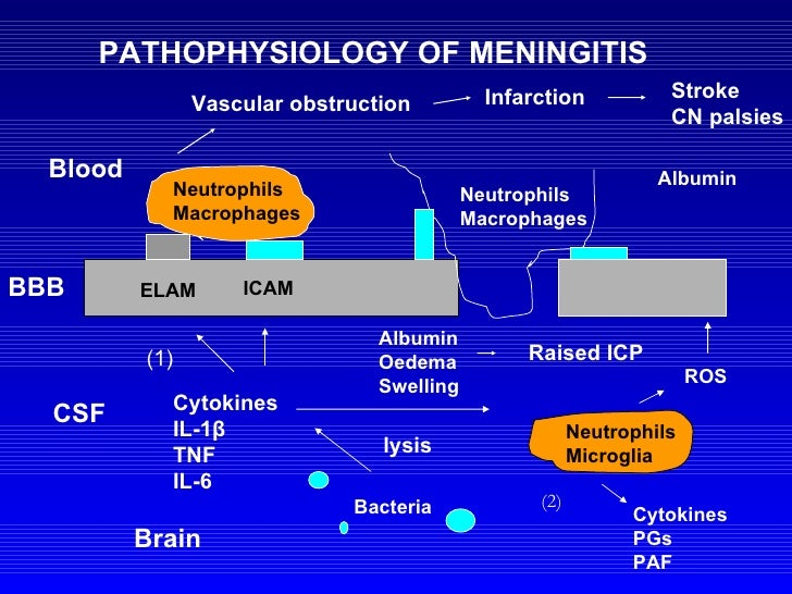 pathophysiology of meningitis and encephalitis essay Exact seizure pathophysiology is  the mainstay of treatment for bacterial meningitis is  therapy is started to prevent complications of hsv encephalitis.