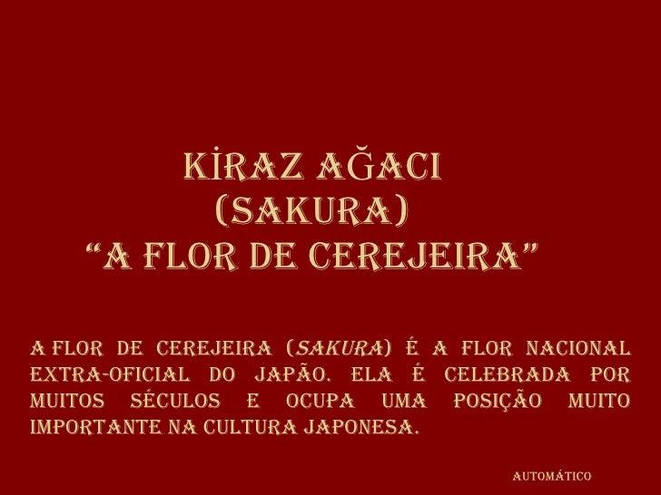 """KİRAZ AĞACI (SAKURA) """"A flor de cerejeira"""" Aflor de cerejeira ( sakura ) é a flor nacional extra-oficial do Japão. Ela é ..."""