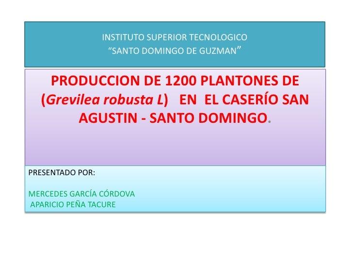 """INSTITUTO SUPERIOR TECNOLOGICO""""SANTO DOMINGO DE GUZMAN""""<br />PRODUCCION DE 1200 PLANTONES DE (Grevilearobusta L)  EN  EL C..."""