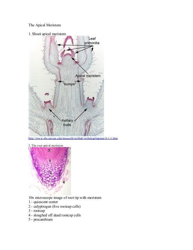 Meristematic tissues