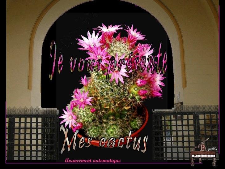Mes cactus (My cactus)