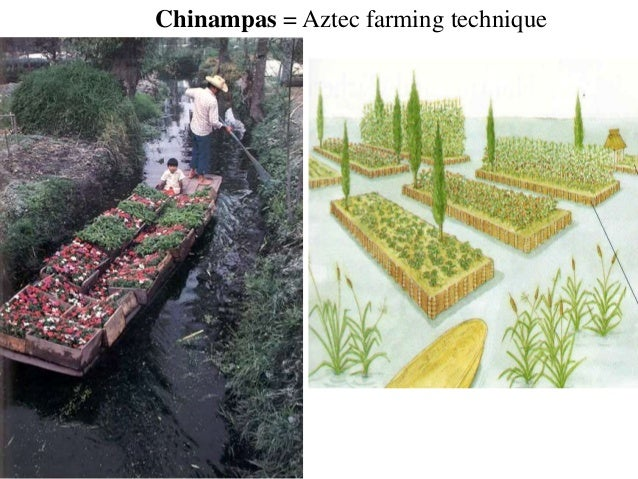 Origins of agriculture Mesoamerica An understanding of Mesoamerican agricultural origins is hampered by the fact that few archaeological sites pertinent to the