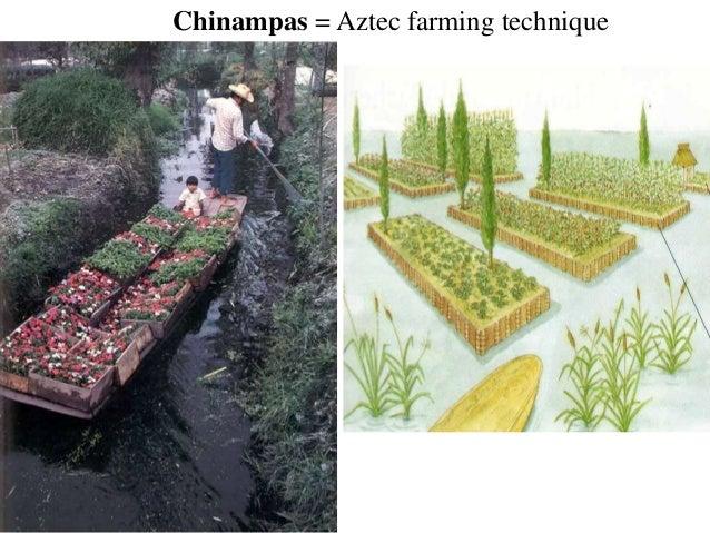 Aztec Chinampas Related Keywords - Aztec Chinampas Long ...