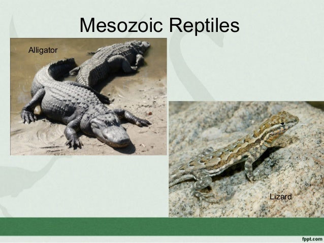 mesozoic reptiles Because the diapsid reptiles (dinosaurs in particular) were seen as the dominant terrestrial life forms during that time, being both the apex.