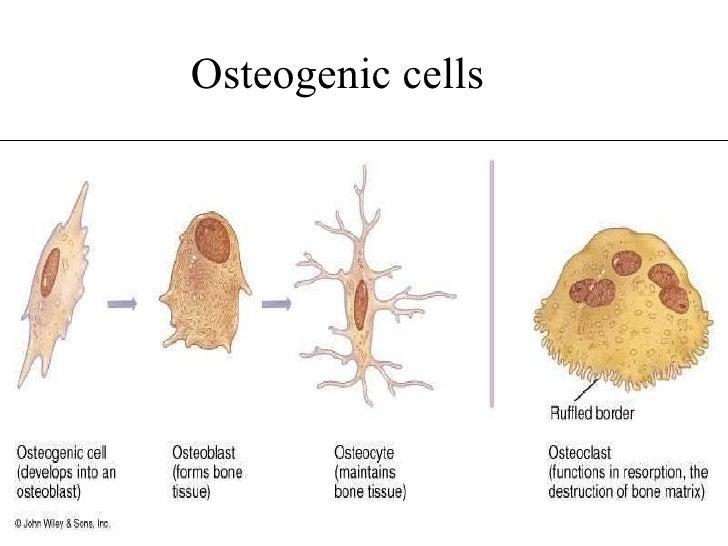 Disorders of Bone Remodeling