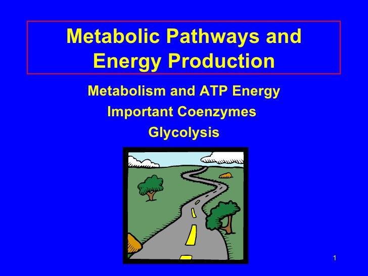 Metabolic Pathways and Energy Production <ul><li>Metabolism and ATP Energy </li></ul><ul><li>Important Coenzymes  </li></u...