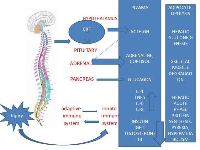 Metabolic response to trauma