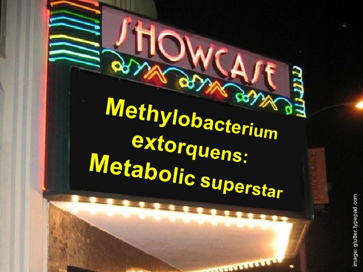 Methylobacterium extorquens: Metabolic superstar