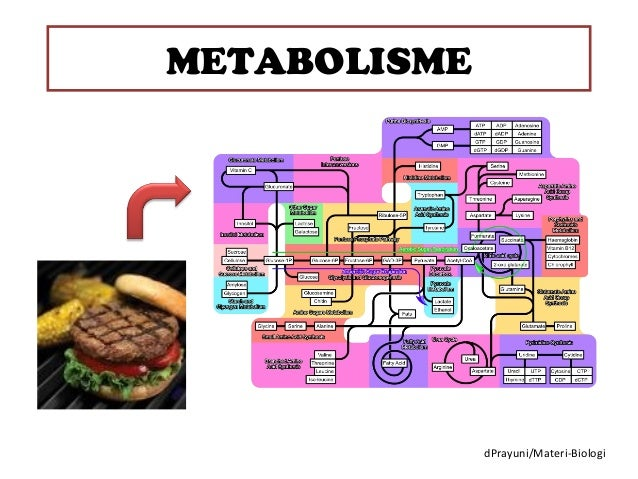 METABOLISME              dPrayuni/Materi-Biologi