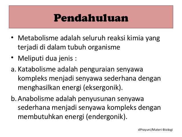 Pengertian Anabolisme, Reaksi dan Tahapannya (Lengkap!)