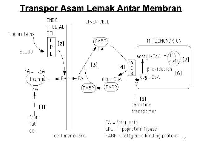 koolhydraten metabolisme
