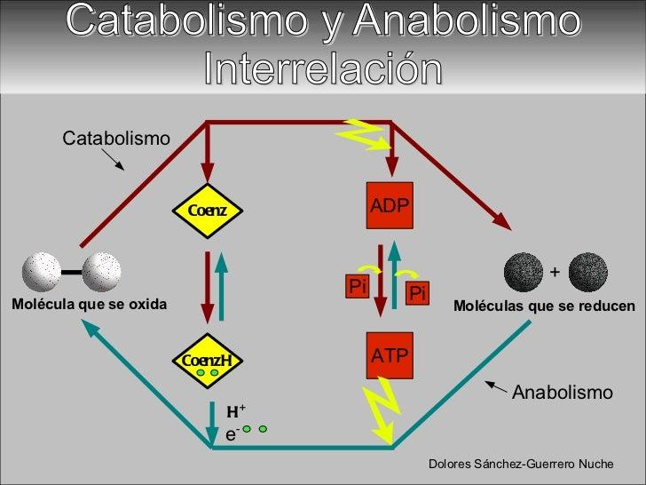 anabolico ejemplos