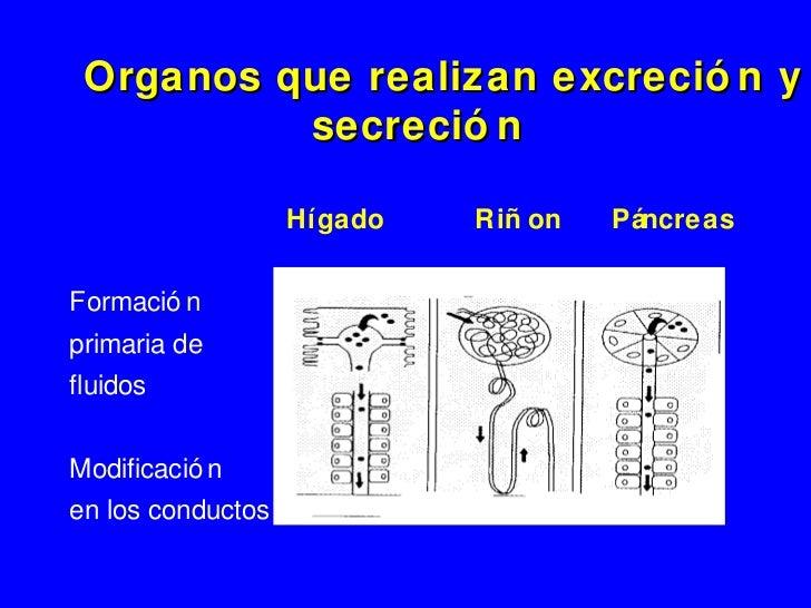 Metabolismo de ácidos biliares