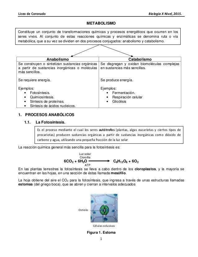 Liceo de Coronado Biología X Nivel, 2015. 1 METABOLISMO Anabolismo Catabolismo Se construyen o sintetizan sustancias orgán...
