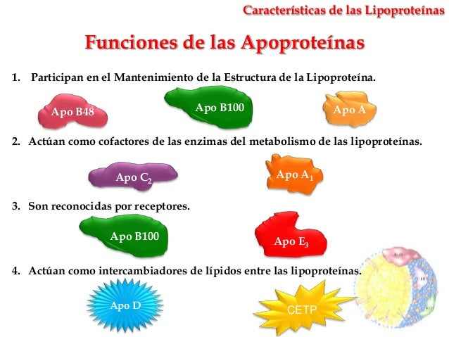 Sabrosos, necesarios y peligrosos lipidos xD Metabolismo-de-las-lipoproteinas-fabin-rodrguez-13-638