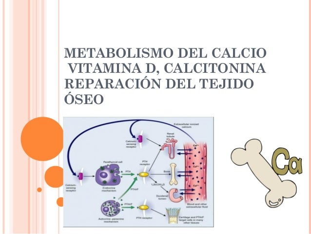 METABOLISMO DEL CALCIO VITAMINA D, CALCITONINA REPARACIÓN DEL TEJIDO ÓSEO