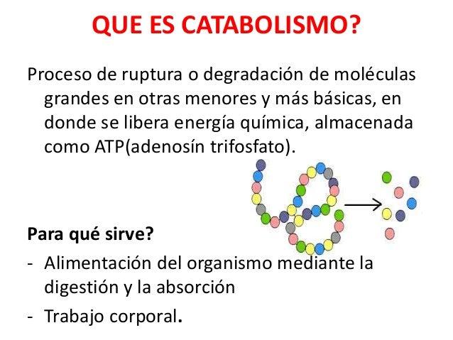 anabolico catabolico y metabolico