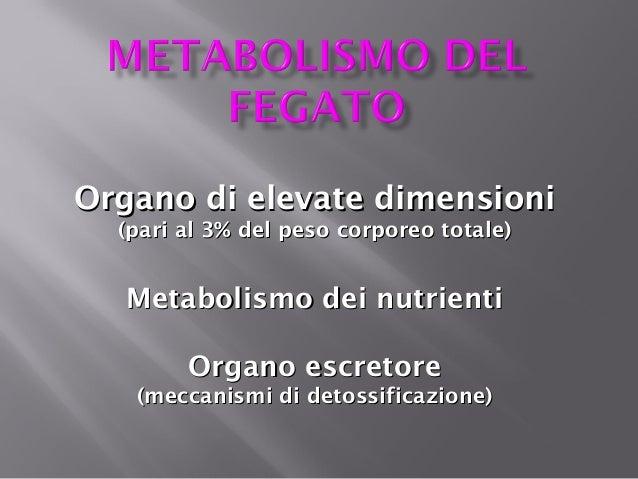 Organo di elevate dimensioni (pari al 3% del peso corporeo totale)  Metabolismo dei nutrienti Organo escretore (meccanismi...