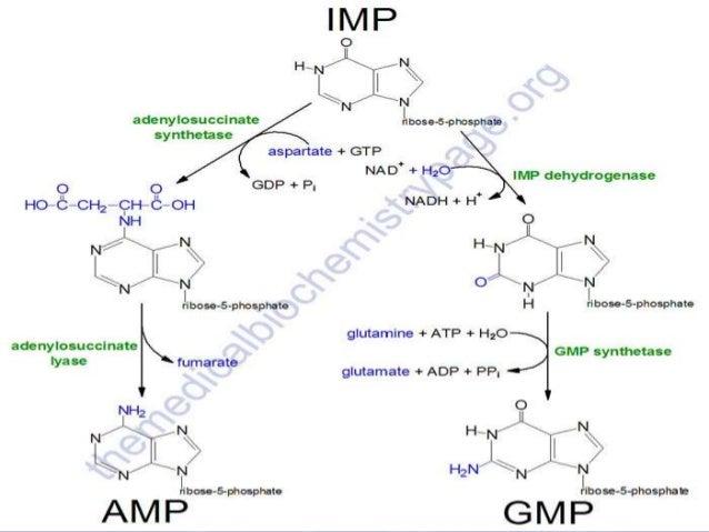 Homo sapiens diseases  Lymphoproliferative disorders