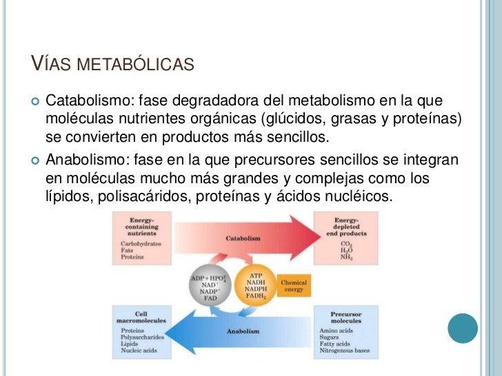proteinas anabolicas efectos secundarios