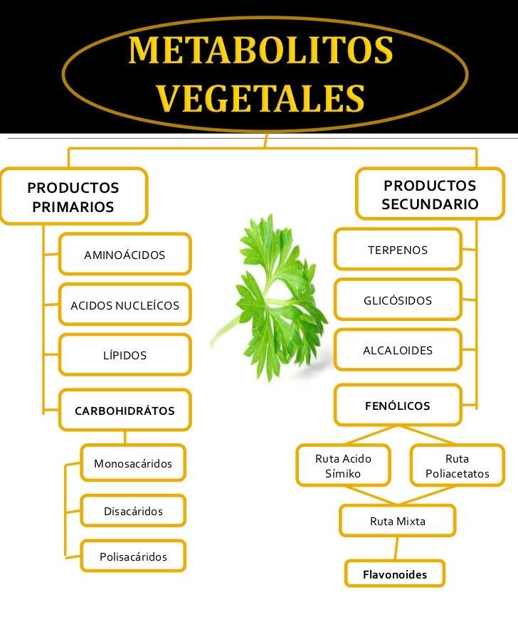 Respiracion y fotosintesis de la planta 85