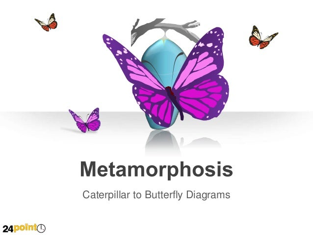 Metamorphosis: Butterfly and Caterpillar - Editable PowerPoint Illustrations