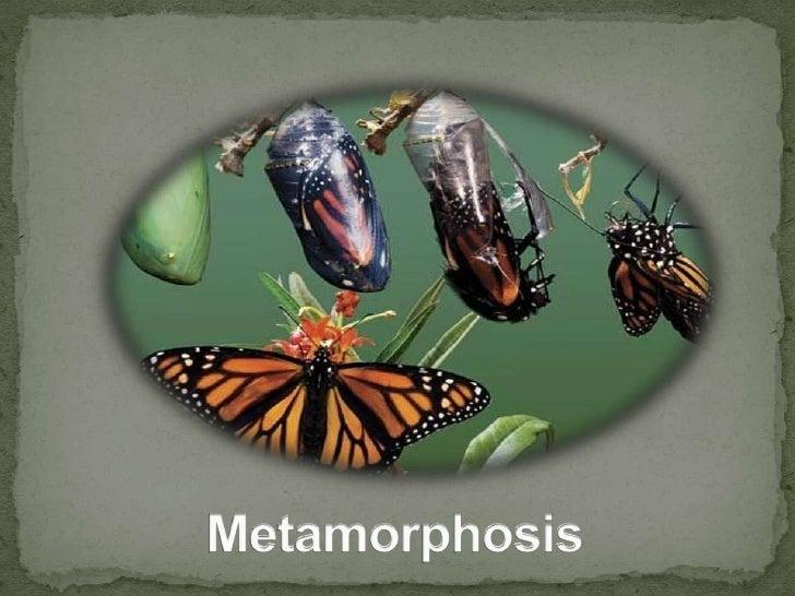 Metamorphosis<br />