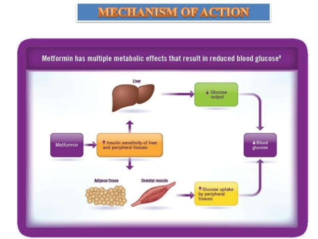 metformin research paper Find patient medical information for metformin oral on webmd including its uses, side effects and safety, interactions, pictures, warnings and user ratings.