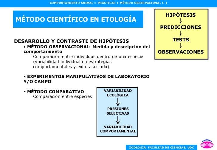 MÉTODO CIENTÍFICO EN ETOLOGÍA <ul><li>DESARROLLO Y CONTRASTE DE HIPÓTESIS </li></ul><ul><ul><li>MÉTODO OBSERVACIONAL: Medi...