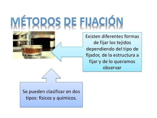 Existen diferentes formas de fijar los tejidos dependiendo del tipo de fijador, de la estructura a fijar y de lo queramos ...