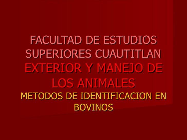 FACULTAD DE ESTUDIOS SUPERIORES CUAUTITLAN EXTERIOR Y MANEJO DE LOS ANIMALES METODOS DE IDENTIFICACION EN BOVINOS