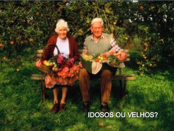 Meu Querido Meu Velho