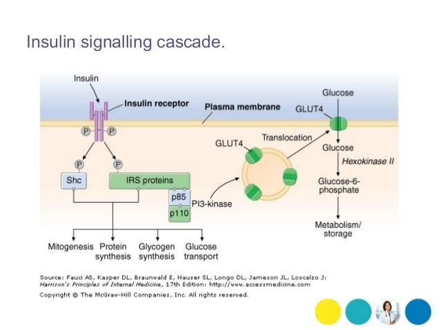 protein hormones insulin ketogenicdietpdfcom
