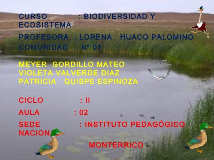 CURSO  : BIODIVERSIDAD Y ECOSISTEMA PROFESORA  : LORENA  HUACO PALOMINO COMUNIDAD  : Nº 01 MEYER  GORDILLO MATEO VIOLETA V...