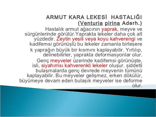 ARMUT KARA LEKESİ HASTALIĞI                              (Venturia pirina Aderh.)             Hastalık armut ağacının yapr...