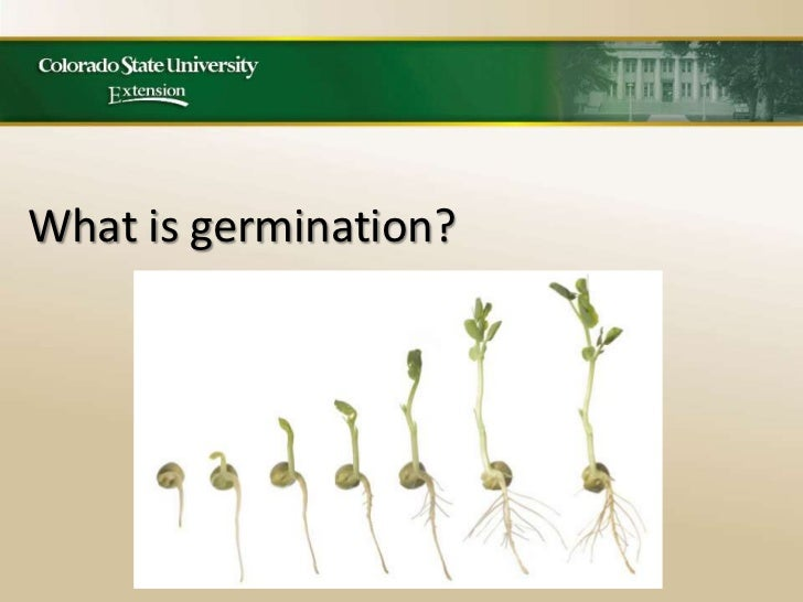 Mg seed germination workshop
