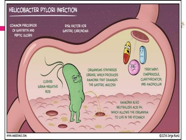 Forum on this topic: Acidophilus, acidophilus/