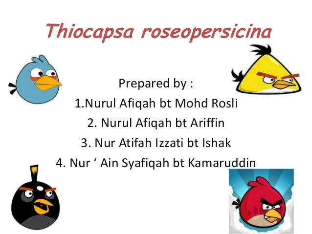 Thiocapsa roseopersicina             Prepared by :     1.Nurul Afiqah bt Mohd Rosli       2. Nurul Afiqah bt Ariffin      ...