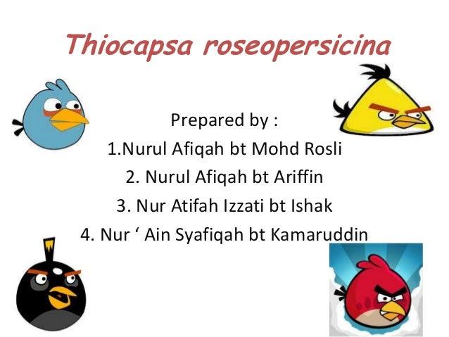 Mic 159 thiocapsa roseopersicina