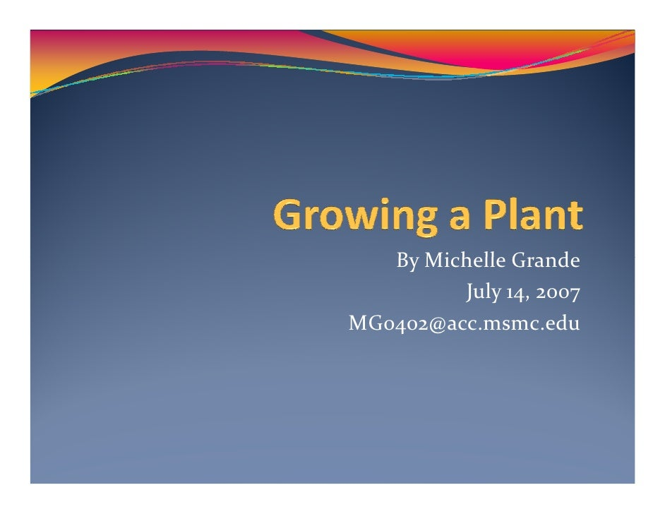By Michelle Grande          July 14, 2007 MG0402@acc.msmc.edu