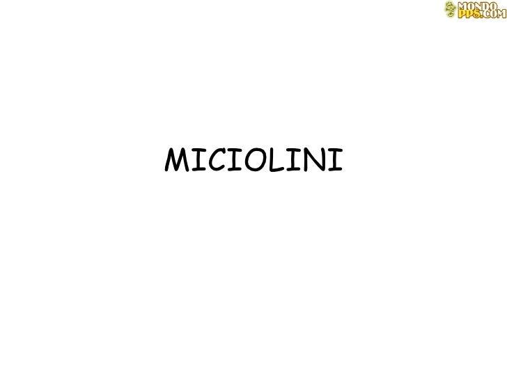 Miciolini